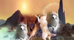 Astrology - Eclipse - Astrologysa - astrology south africa - June 2020 - newsletter - finding the balance